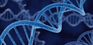 DNA-smaller